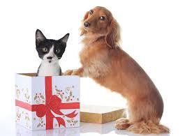 fun and easy diy christmas pet gift ideas petstayadvisor
