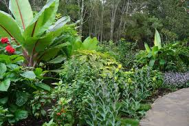 gondwana wholesale native plant nursery australia tropical gardens2 peter nixon jpg