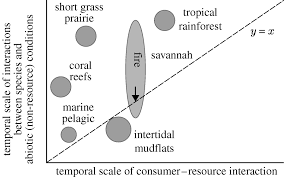 parallel ecological networks in ecosystems philosophical