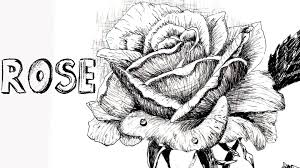 how to draw a rose in pen u0026 ink 1 youtube