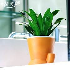 best plants for office there is a grant out there to study almost