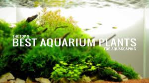 Aquascape Freshwater Aquarium Top 5 Best Aquarium Plants For Aquascaping Aquatic Mag