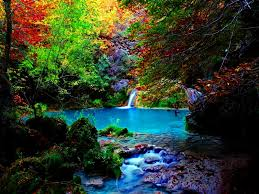 forest water stream beautiful summer trees stones forest calm