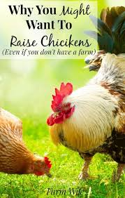 Chickens For Backyard 2858 Best Chickens The Girls Images On Pinterest Backyard