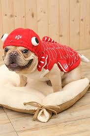 Goldfish Halloween Costume Red Goldfish Pet Dog Cute Halloween Costume