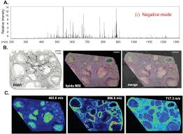 biology free full text maldi mass spectrometry imaging of