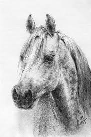 pictures pencil drawings horses drawing art gallery