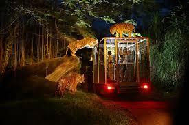 jeep light bar at night night safari bali safari marine park