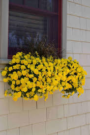 Deck Railing Planter Box Plans by 83 Best Window Boxes And Balcony Railing Planters Images On