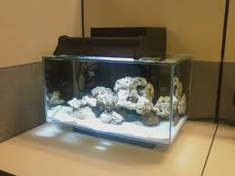 Fluval Edge Aquascape Fluval Edge 6 Gallon Nano Reef Central Online Community