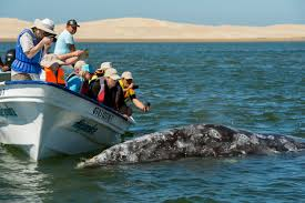 places to go for thanksgiving vacation top 10 things to do in cabo san lucas
