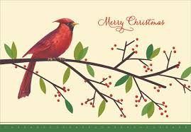 cardinal on branch box of 18 cards by designer greetings
