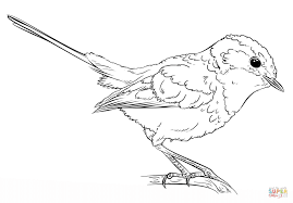 blue wren coloring page free printable coloring pages