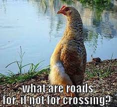 Funny Chicken Memes - 20 chicken memes that are surprisingly funny glamxer