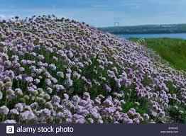 irish native plants 100 wild irish flowers wildflowers ie sandro u0027s irish