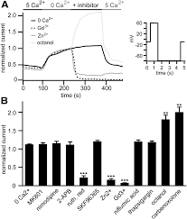 Driscoll S Black Amp White Clhm 1 Is A Functionally Conserved And Conditionally Toxic Ca2