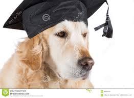 dog graduation cap and gown dog graduation cap stock photos images pictures 73 images
