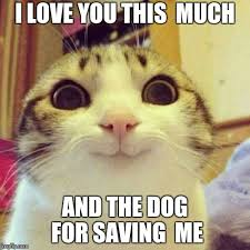 I Love You This Much Meme - smiling cat meme imgflip