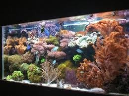 Reef Aquarium Lighting Saltwater And Reef Tank Cycling Ratemyfishtank Com