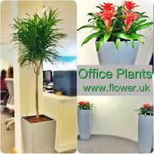 Office Plants by Buy Office Plants