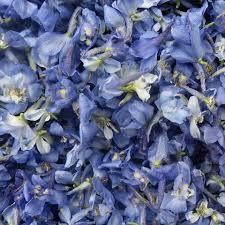 delphinium flowers blue delphinium flowers petalmania
