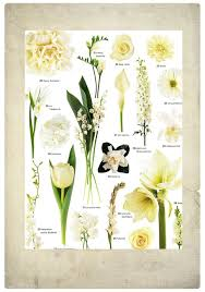 wedding flowers types white wedding flowers by name wedding flowers from springwell