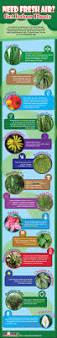 need fresh air get indoor plants infographic gardening