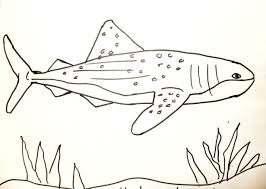 drawn shark whale shark pencil and in color drawn shark whale shark