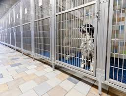 kennel run system with stainless steel gates u0026 raised floors