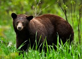 Arkansas Wildlife images Wildlife arkansas foundation for agriculture jpg