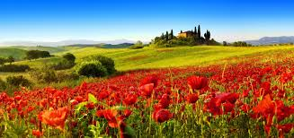 field nature flowers nice italy pretty sky spring beautiful lovely