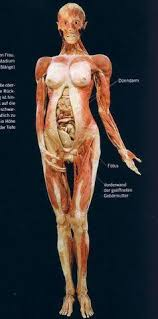 Anatomy And Physiology Human Body 25 Best Images About Anatomy Show On Pinterest