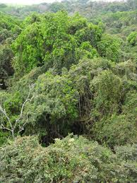 Above The Canopy february 2013 mis adventures in panama
