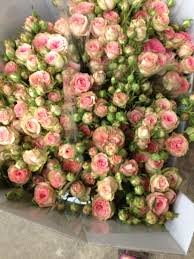 roses wholesale spray called pepita sold in bunches of 10 stems from the