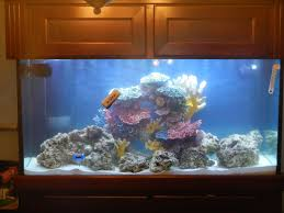 Floating Aquascape Reef2reef Saltwater And Reef Aquarium Forum - squishie u0027s 90g fowlr page 2 reef2reef saltwater and reef