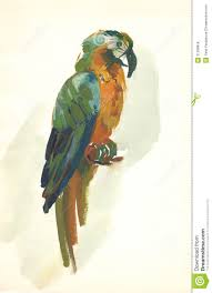 watercolor parrot sketch stock illustration image of painting