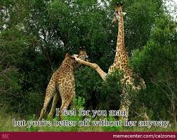 Drunk Giraffe Meme - comforting giraffe by calzones meme center