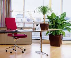 inspiration 30 office indoor plants inspiration of 9 low