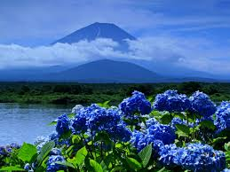flower spring beauty lake blue blossoms mountain exotic wallpaper