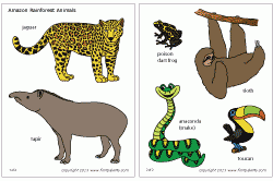 rainforest animals pictures with names wallpaper sportstle