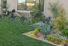 front yard succulents