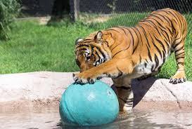dickerson park zoo u2013 springfield missouri zoo