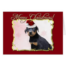 doberman pinscher greeting cards zazzle
