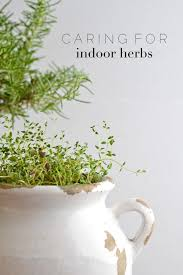 tips for keeping indoor herbs alive for longer than a month
