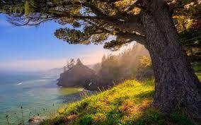 Oregon landscapes images Nature landscape oregon sea sunlight coast forest grass jpg