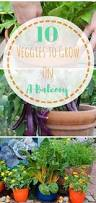 10 Vegetables U0026 Herbs You by These Secrets To High Yield Vegetable Gardening Will Help You Make