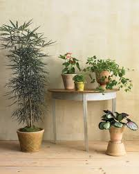 Indoor Plant Light by Houseplants For Any Kind Of Light Martha Stewart
