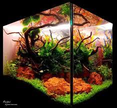 Aquascape Com 328 Best Aquascape Images On Pinterest Aquarium Ideas