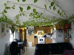 hunter covent garden ceiling fan ceiling garden indoor garden ideas hang your plants from the ceiling