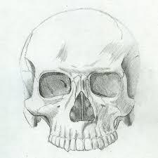 anatomy study skull by master futon on deviantart